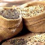 Сочевиця: склад, користь і властивості, рецепти страв з сочевиці