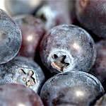 Чорниця: склад, користь і властивості чорниці, народні рецепти з чорниці