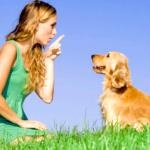 Дресирування собак: рекомендації кінологів