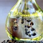 Ефірне масло лаванди (лавандова олія): властивості, застосування лавандового масла