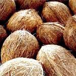 Кокос: склад, користь і властивості кокоса