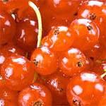Червона смородина: склад, властивості і користь червоної смородини