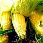 Кукурудза: склад, користь і властивості кукурудзи, протипоказання до застосування кукурудзи