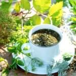 Лікарські трави ефективно знизять апетит