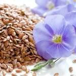 Льон цілющі і лікувальні властивості