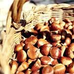 Горіхи. Користь горіхів: мигдаль, волоський горіх, макадамія, арахіс, бразильський горіх