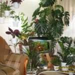 Спокій кімнатних рослин. Вологість повітря для рослин