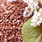 Рецепти приготування смачної гречаної каші