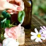 Софора японська: застосування рослини в медицині і косметології