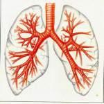 Дієта при лікуванні бронхіту