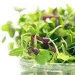 Кресс-салат: склад, користь і властивості, застосування