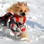 Одяг для собак - одягаємо улюбленця по моді і по погоді!
