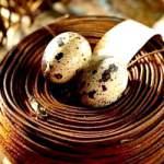 Перепелині яйця, склад і властивості