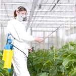 Чому так небезпечні пестициди