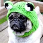 Собака породи мопс - відмінний друг і компаньйон